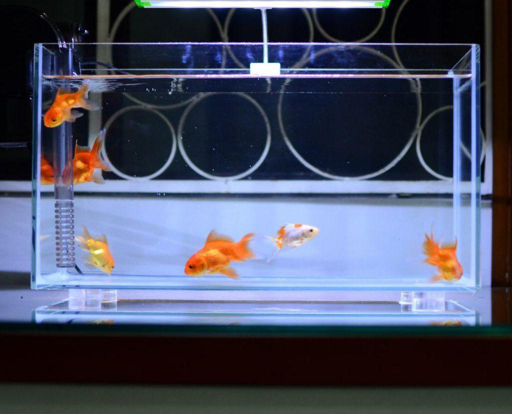 Cắt laser mica làm hồ cá